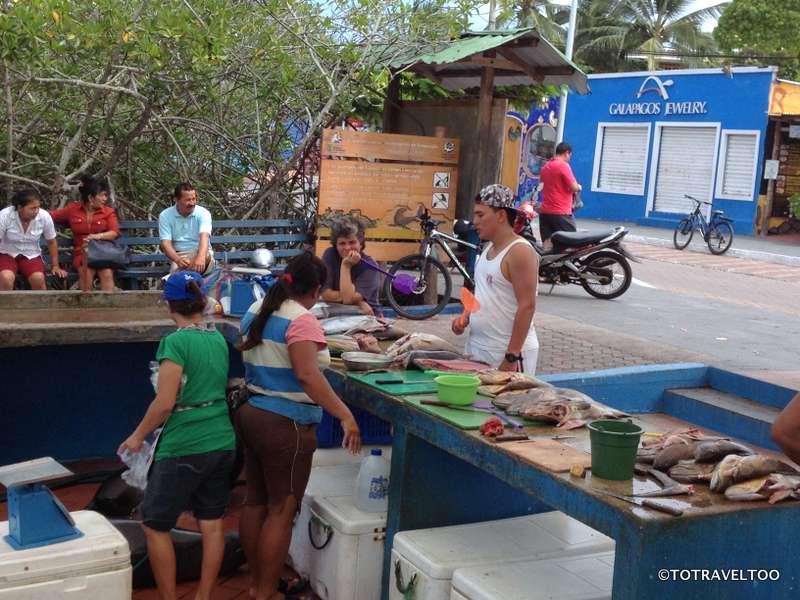 Busy times at the Santa Cruz Fish Market on the Galapagos Islands