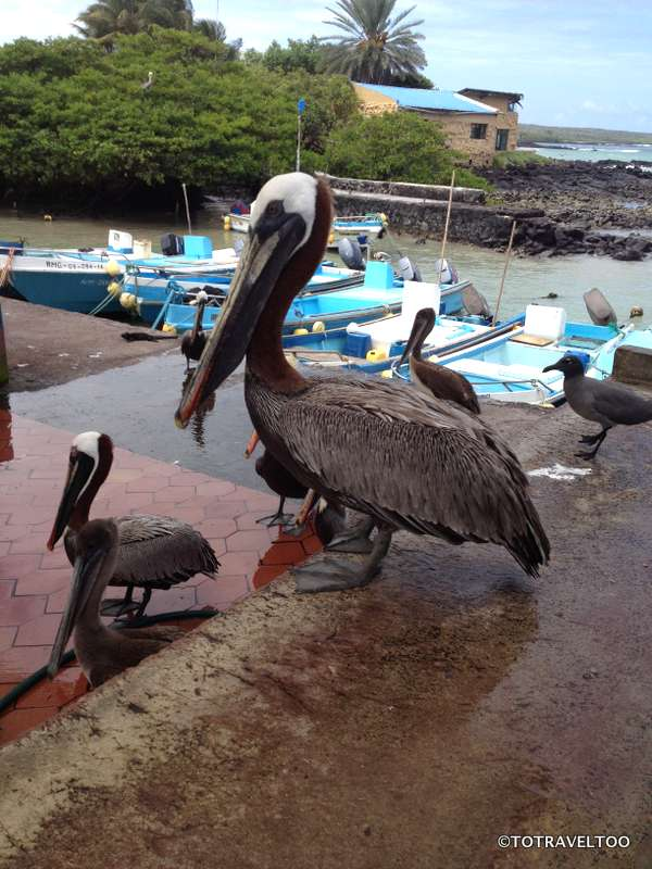 Move over we are waiting too! Locals in Galapagos Islands.