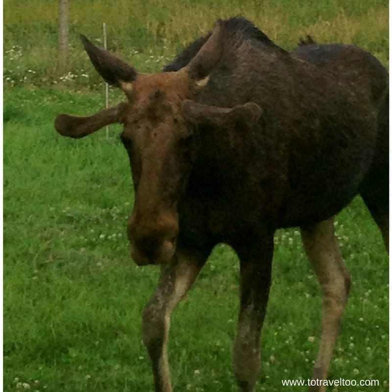 Visit Stockholm and Oster Malma Wildlife Reserve