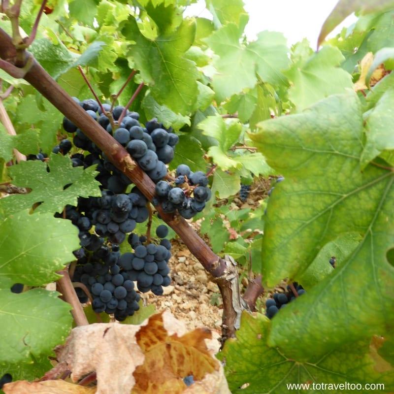Croatian Wines Plavac Mali Dingac