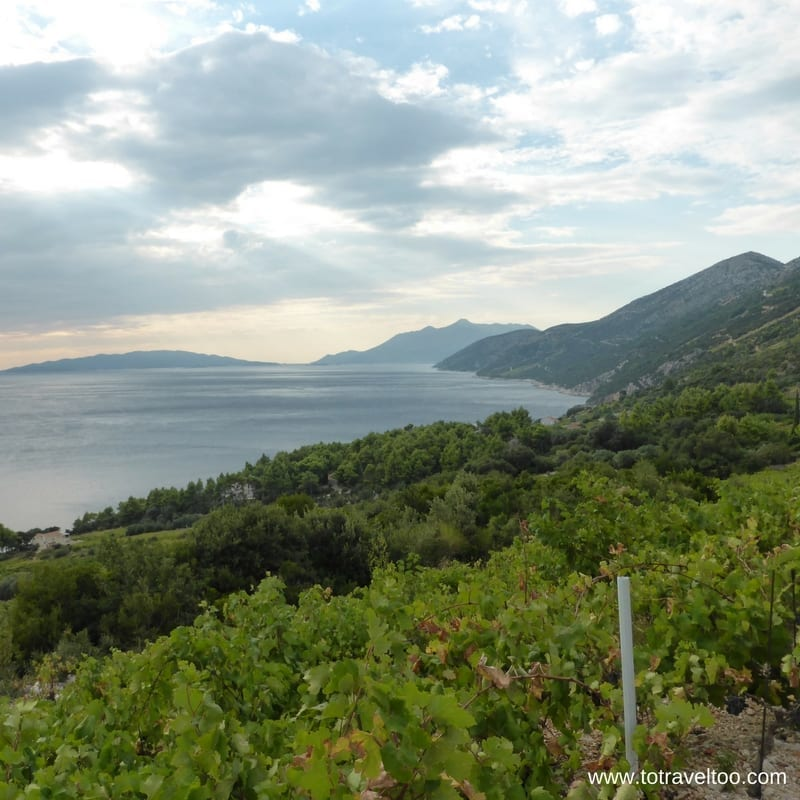 Dingac Croatian Wines