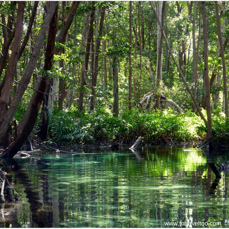 Serene mangroves