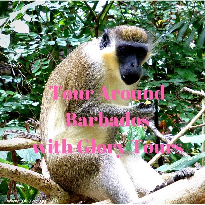Tour Around Barbados with Glory Tours