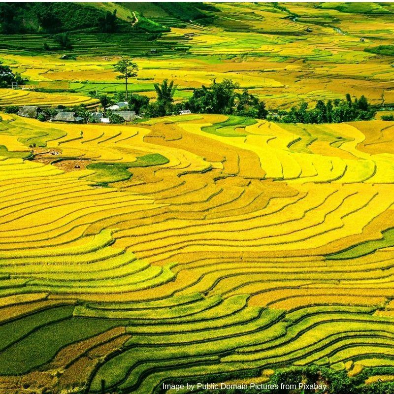 Vietnamese Visa on Arrival