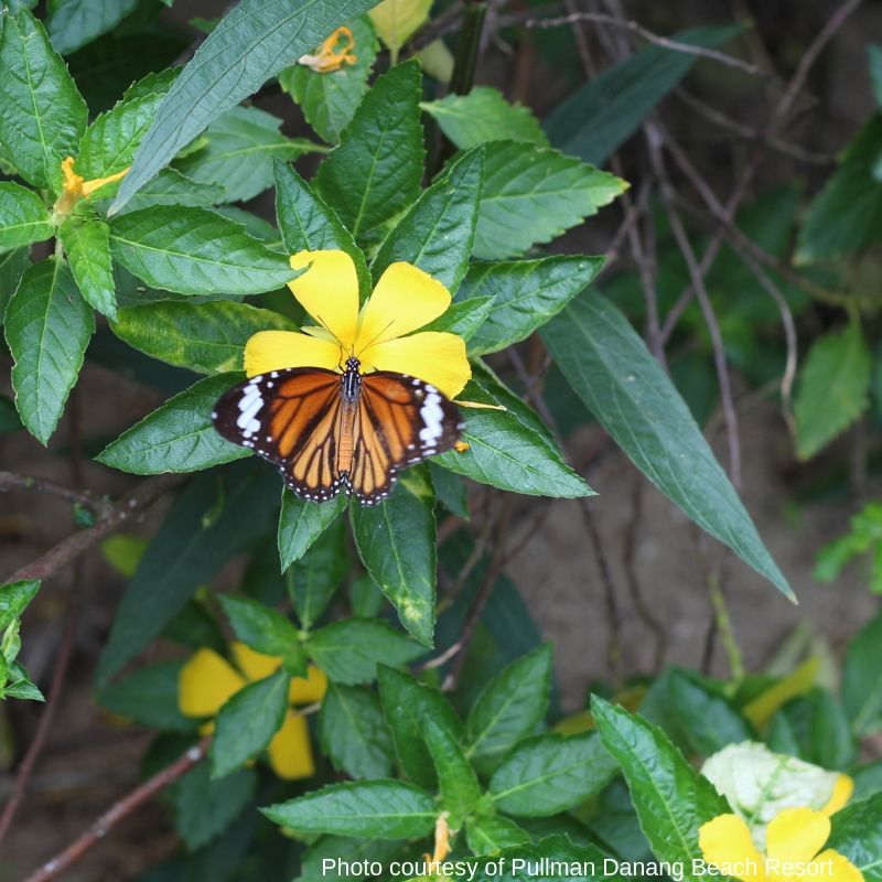 Butterfly Farm - luxury escape in Vietnam