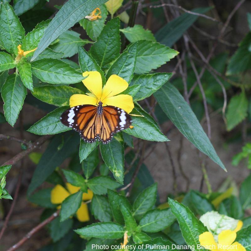 Butterfly Farm - luxury escape in Vietnam