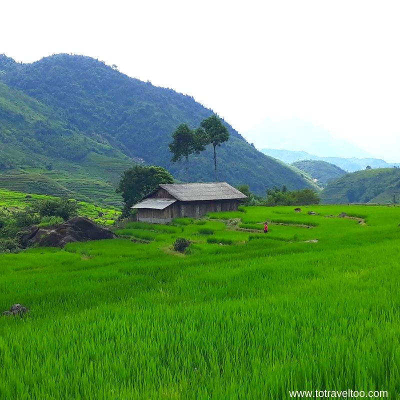 Biking through terraced rice fields - things to do in Sapa