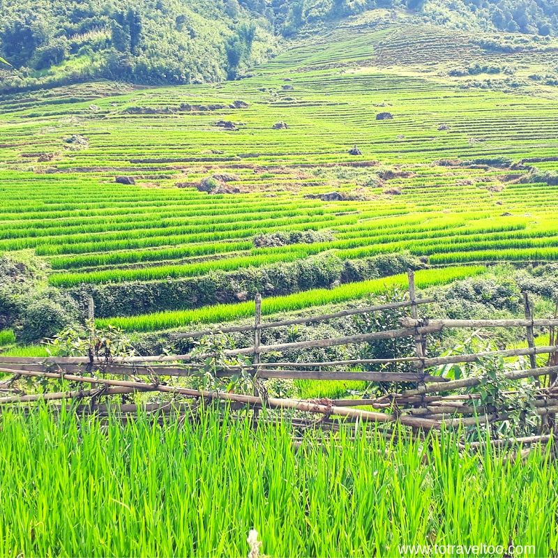 Rice paddy fields - things to do in Sapa