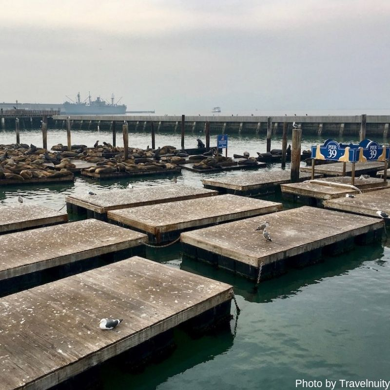 Sea Lions of Fishermans Wharf - 7 Top Things To Do in San Francisco