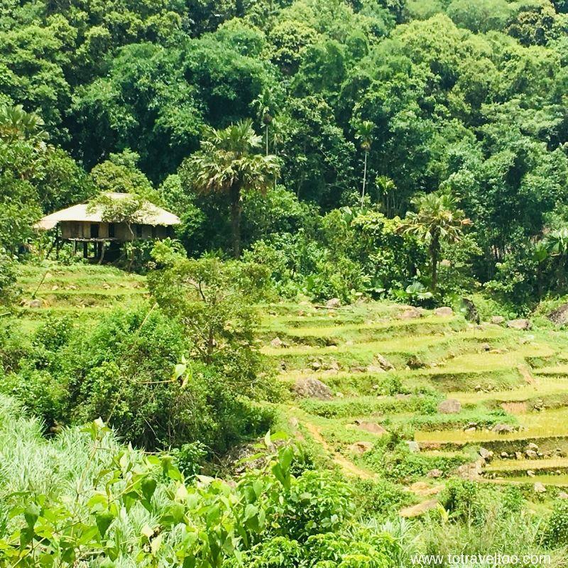 Mai Chau terraced rice field in our Guide to Mai Chau Vietnam