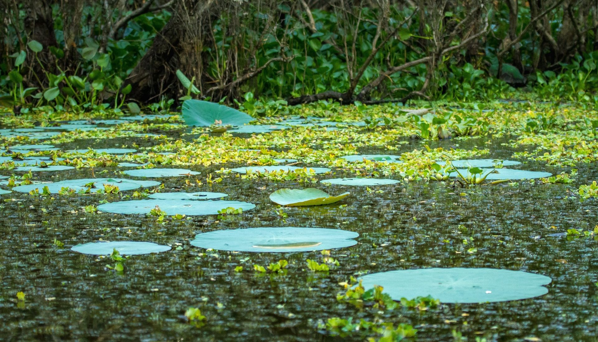 Tra Su Floating Forest