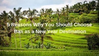 Rice terraces of Bali