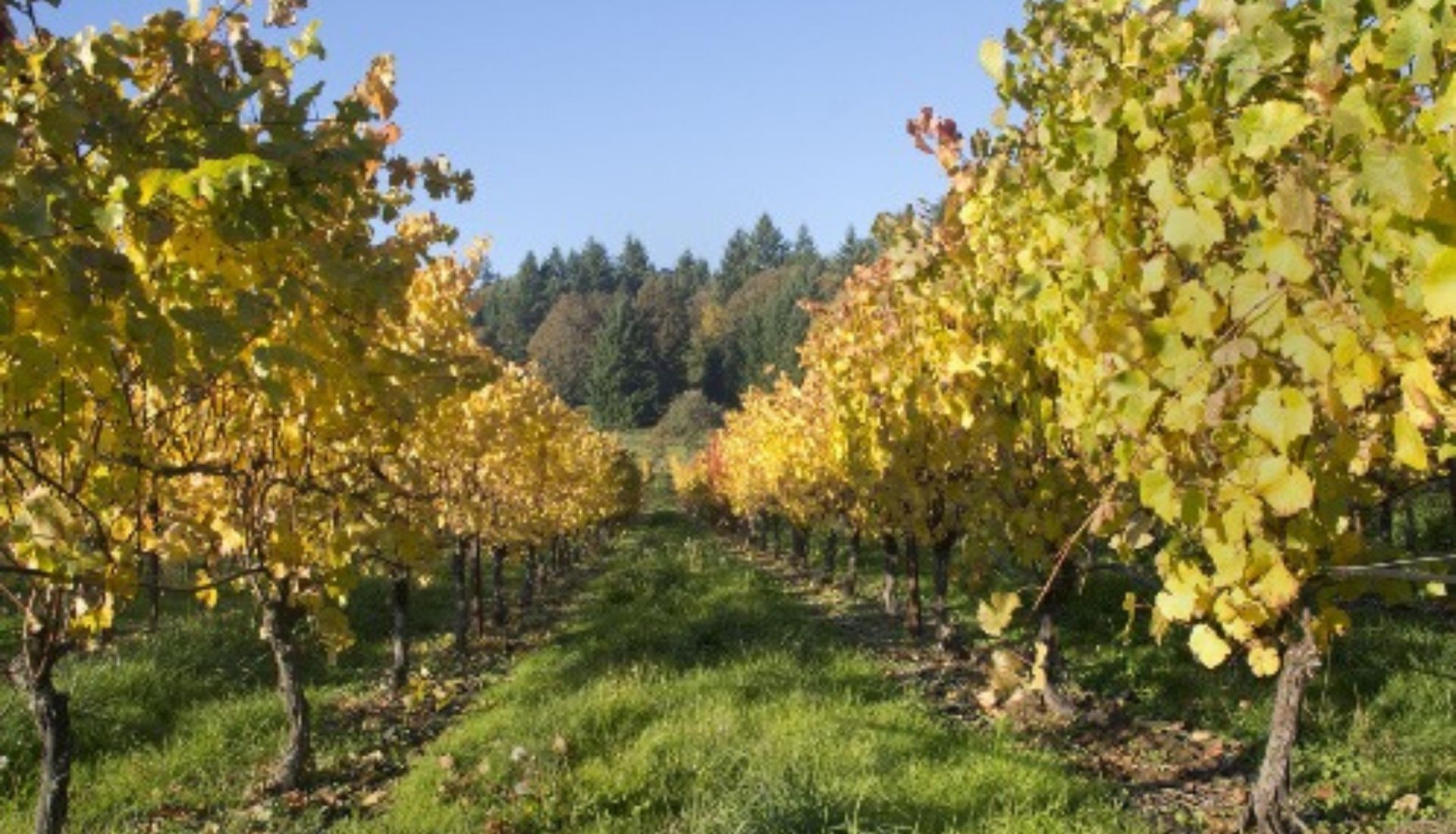 Wine region of Portland Oregon
