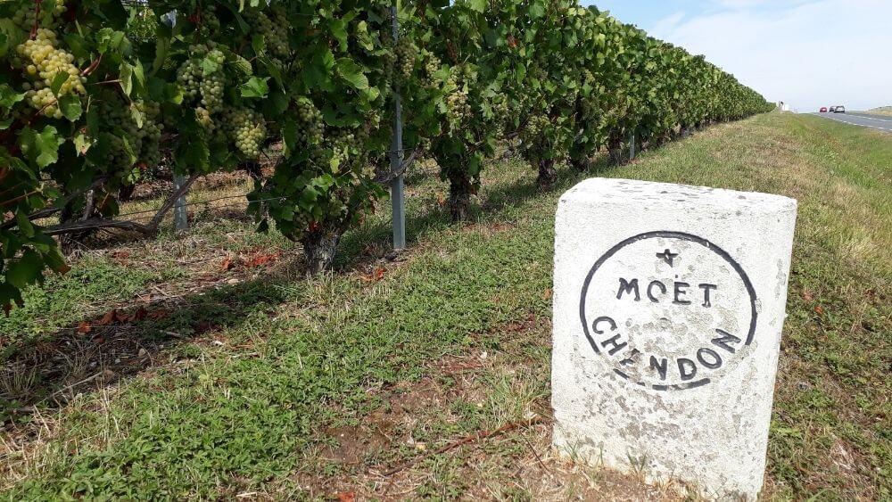 Moet & Chandon vineyards
