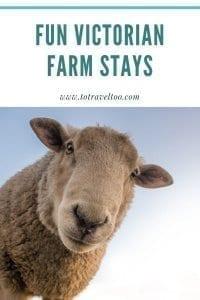 Sheep down on the farm - pinterest