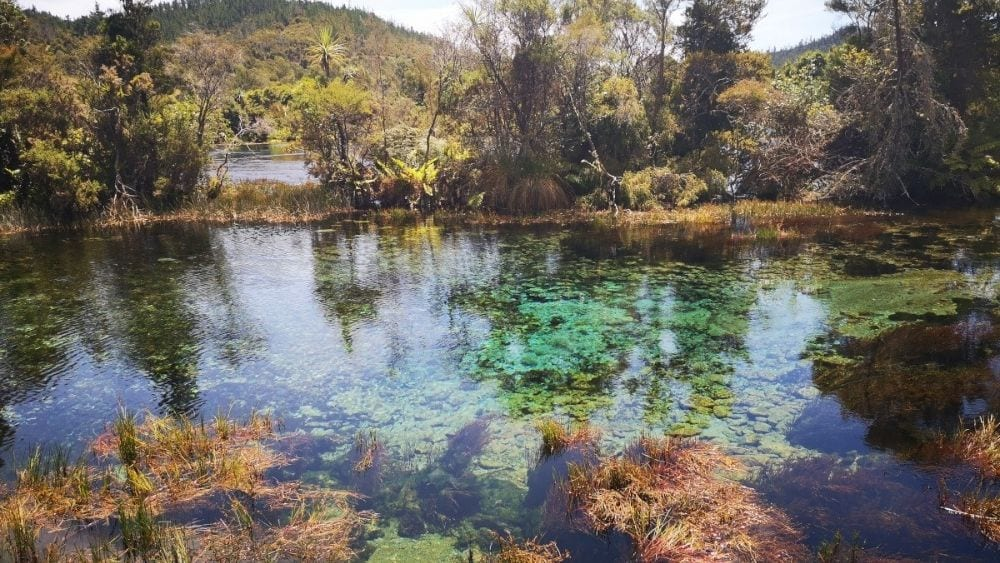 Pupu Springs